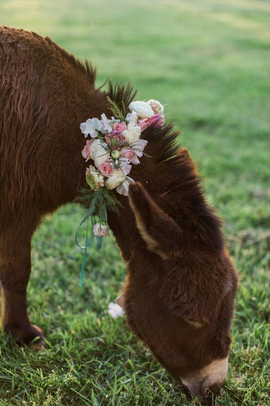 donkey at rustic wedding venue in north carolina