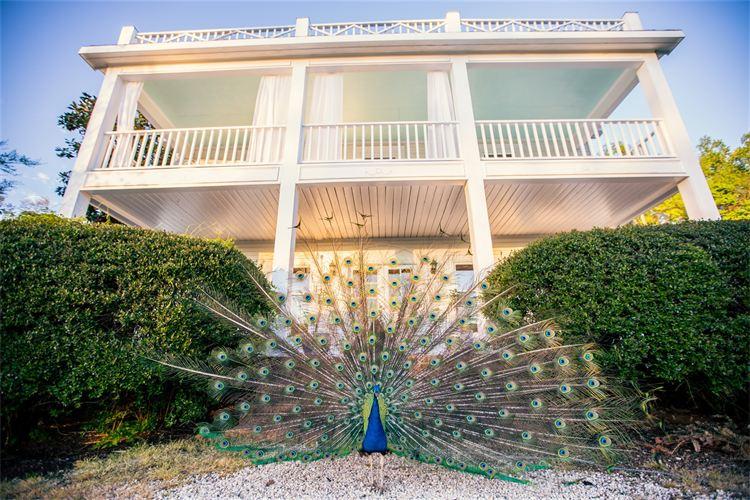 peacock at country wedding venue in north carolina