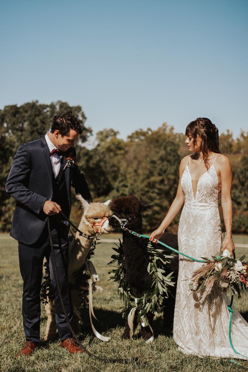 Rustic wedding bride and groom with alpacas